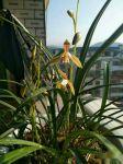 在阳台如何才能养好盆栽花卉